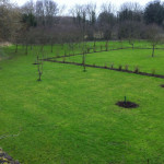 New fruit trees have been planted to replace those which have been lost.